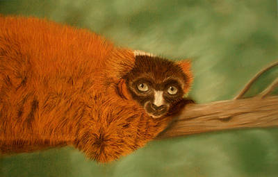 Pastel - Red Ruffed Lemur by Jan Amiss
