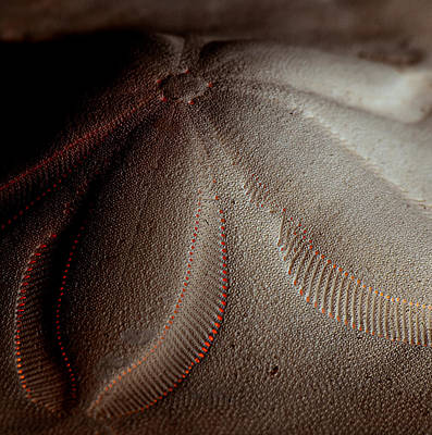 Red Sand Art Print