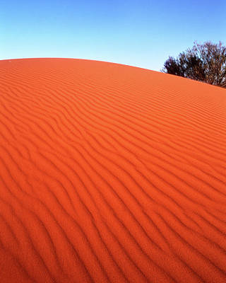 Photograph - Red Sand by Max Neivandt
