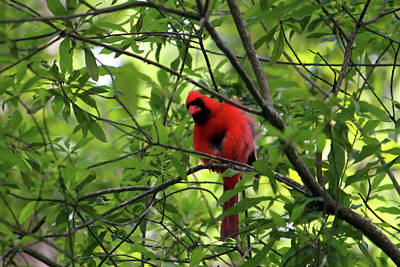 Photograph - Red Says I See You by Cynthia Guinn