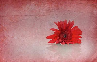 Red Scent Art Print