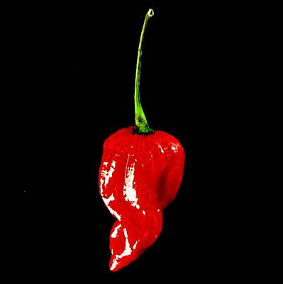 Photograph - Red Scorpion Chilli Pepper by Michael Canning