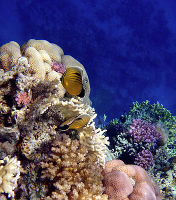 Red Sea Exotic World Art Print