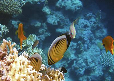 Photograph - Red Sea Magical World by Johanna Hurmerinta