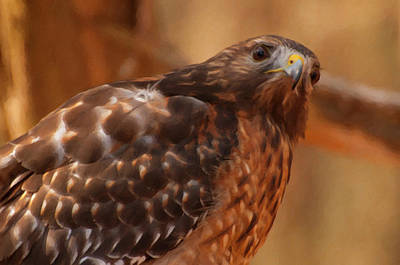 Digital Art - Red Shouldered Hawk 1  by Chris Flees