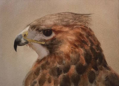 Painting - Red-shouldered Hawk by June Rollins