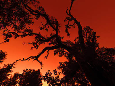 Photograph - Red Sky At Morning by Van Sutherland
