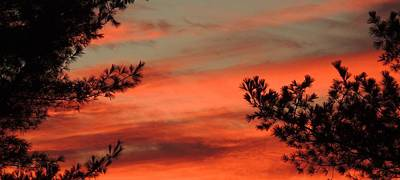 Photograph - Red Sky At Night by Lisa Gilliam