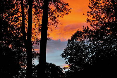 Photograph - Red Sky At Night by Michele Myers