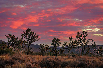 Red Sky Over Joshua Tree Art Print