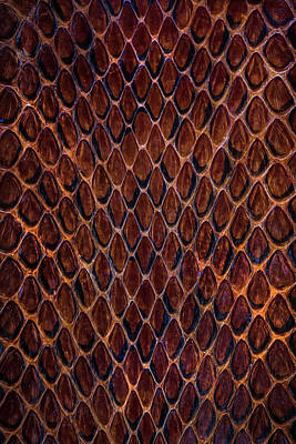 Photograph - Red Snake Skin Pattern by Jaroslaw Blaminsky