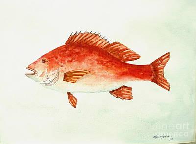 Red Snapper Art Print