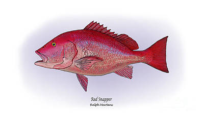 Red Snapper Art Print by Ralph Martens