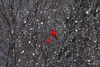 Red Snow Art Print by Bill Stephens