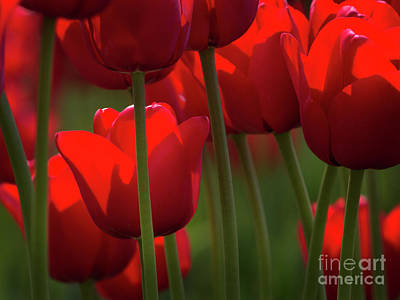 Photograph - Red by Sonya Lang