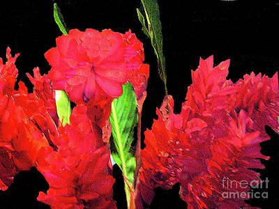 Photograph - Red Spike Flowers by Merton Allen