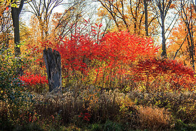 Photograph - Red Splash Of Fall Color by Joni Eskridge