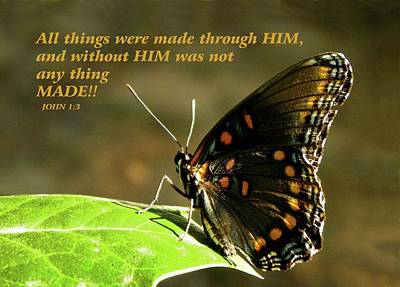 Photograph - Red Spotted Purple Butterfly And Scripture by Sandi OReilly
