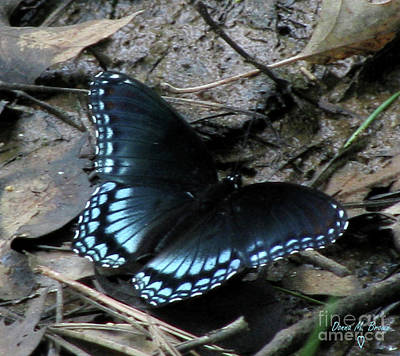 Art Print featuring the photograph Red Spotted Purple Swallowtail Butterfly by Donna Brown