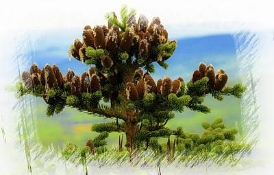 Photograph - Red Spruce Cones 2 by Sherman Perry