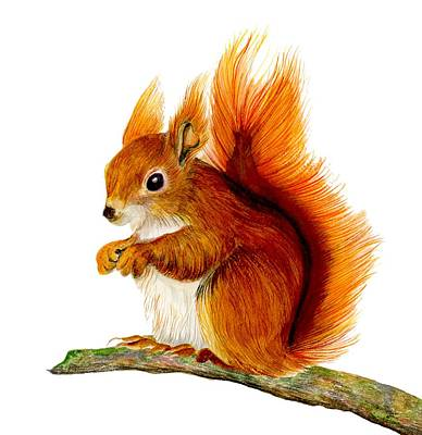 Painting - Red Squirrel by Alison Langridge