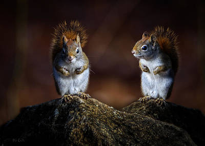 Photograph - Red Squirrel by Bob Orsillo