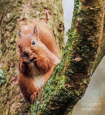 Digital Art - Red Squirrel, Feeding by Liz Leyden