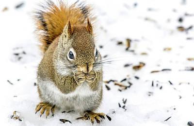 Red Squirrel Art Print by Irwin Seidman