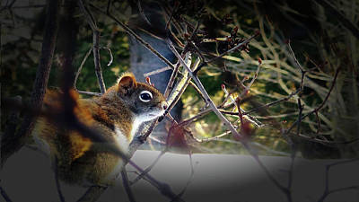 Photograph - Red Squirrel by Mike Breau
