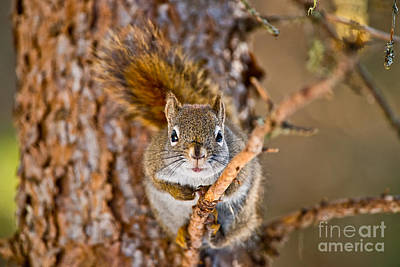 Red Squirrel Pictures 144 Original by World Wildlife Photography