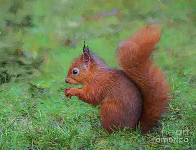 Digital Art - Red Squirrel Profile by Liz Leyden