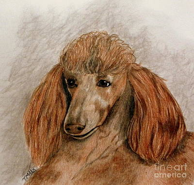 Drawing - Red Standard Poodle by Terri Mills