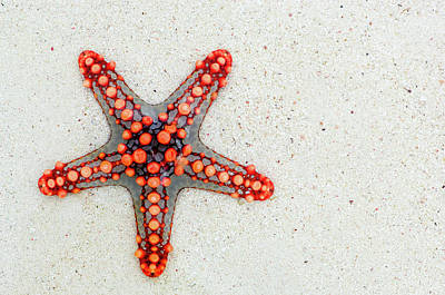 Red Photograph - Red Starfish Art - Sand Beach by Wall Art Prints
