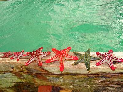 Education By Traveling Photograph - Red Starfish On A Wooden Dhow 1 by Exploramum Exploramum