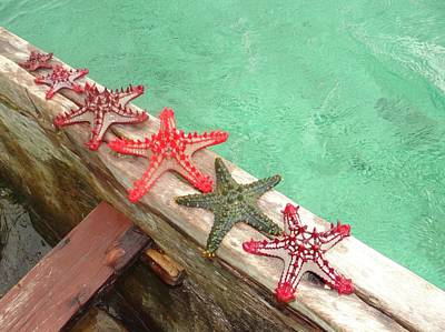 Education By Traveling Photograph - Red Starfish On A Wooden Dhow 2 by Exploramum Exploramum