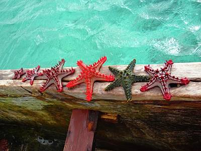 Education By Traveling Photograph - Red Starfish On A Wooden Dhow 5 by Exploramum Exploramum