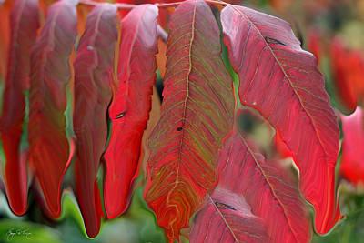 Photograph - Red Sumac Abstract by Wayne King