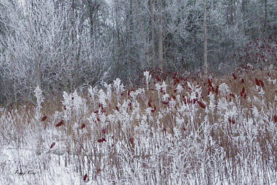 Photograph - Red Sumac On A Winter Palette 1 by Peggy King