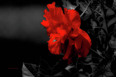 Photograph - Red Surrounded By Black by DigiArt Diaries by Vicky B Fuller