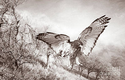 Red Tail Hawk Wall Art - Photograph - Red-tail Autumn Black And White by Laura D Young