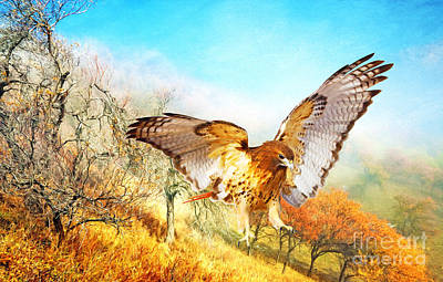 Red Tail Hawk Wall Art - Photograph - Red-tail Autumn by Laura D Young