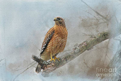 Photograph - Red Tail by Geraldine DeBoer
