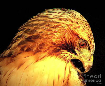 Photograph - Red Tail Hawk  by Christine Zipps