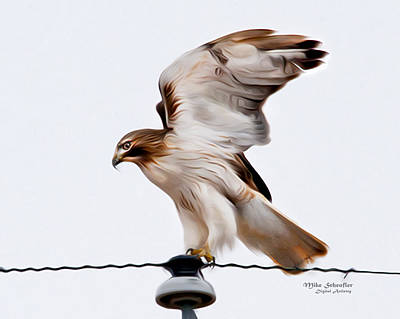 Red Tail Hawk Digital Art - Red Tail Hawk Digital Paint by John Scheufler