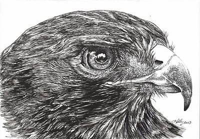 Red Tail Hawks Drawing - Red Tail Hawk by Kathleen Kelly Thompson