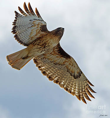 Photograph - Red-tail Hawk-signed-#3094 by J L Woody Wooden