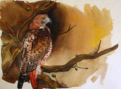 Red Tail Hawk Painting - Red Tail Hawk by Steven  Nakamura