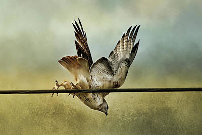 Digital Art - Red Tail Hawk Take Off by TnBackroadsPhotos