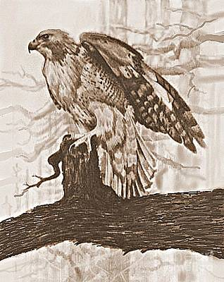 Red Tail Hawks Drawing - Red Tail Hawk by William Michel
