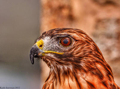 Photograph - Red Tail by Kathi Isserman